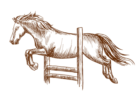 hippodrome: Wild horse runs and jumps over barrier. White stallion leaping over fence. Vector thin line sketch Illustration