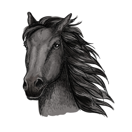 glance: Black proud horse portrait.