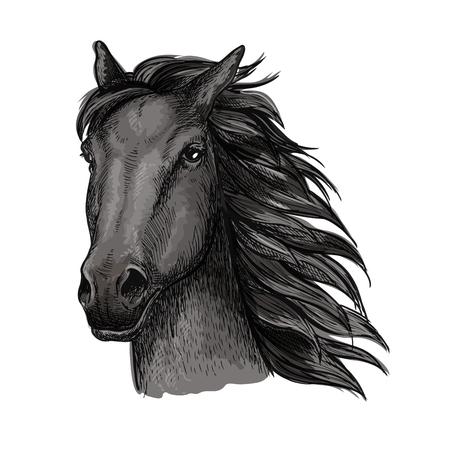Black proud horse portrait.