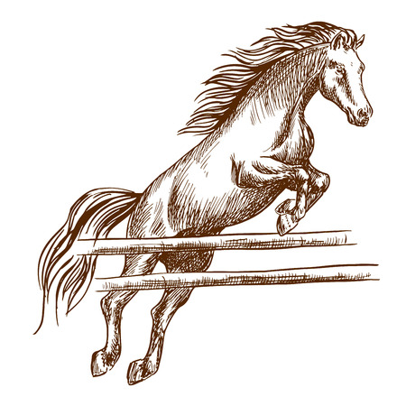 fences: Wild horse jumping high and leaping over wooden barrier. Brown stallion overcoming fence. Vector thin line sketch Illustration