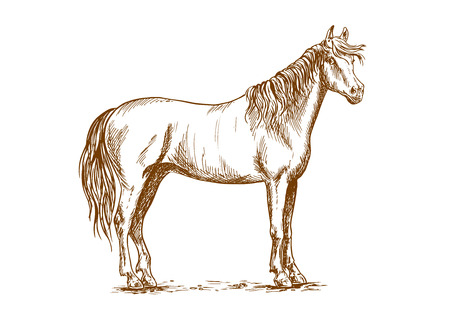 Horse standing and looking with half turned head. Illustration