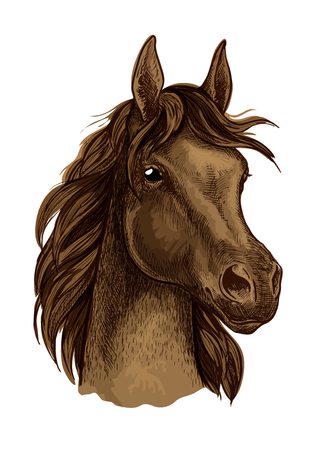 looking straight: Brown horse artistic portrait.