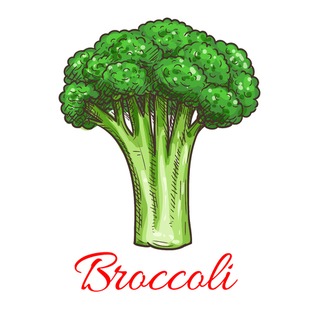 fresh vegetable: Broccoli leafy cabbage vegetable. Vegetarian fresh food product element for sticker, grocery shop, farm store element Illustration