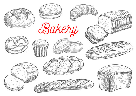 wheat bread: Bread sorts and bakery products. Rye bread, ciabatta, wheat bread, muffin and bun, bagel, sliced bread and french baguette, croissant and pretzel, biscuit. Vector sketch