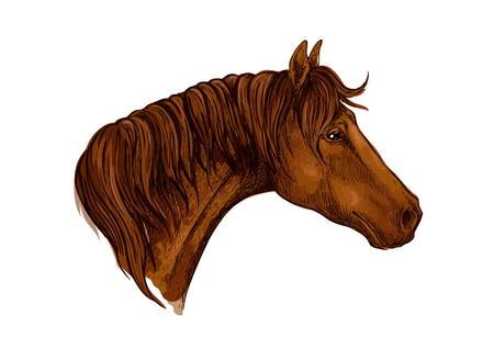 Horse noble profile portrait.