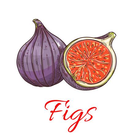 Figi owoce. Odizolowane całe i cięte fig. Godło produktu owocowego na etykietę z sokiem lub dżemem, naklejkę opakowania, sklep z artykułami spożywczymi, sklep z gospodarstwem
