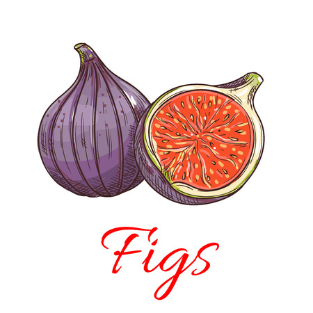 Figs fruits. Isolated whole and cut fig. Fruit product emblem for juice or jam label, packaging sticker, grocery shop tag, farm store
