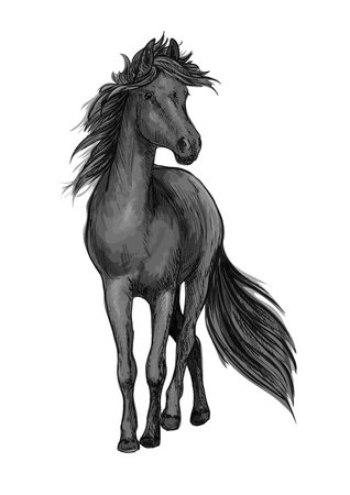 Walking black horse pencil sketch portrait. Stallion standing on hoofs with mane and tail waving in wind Illustration