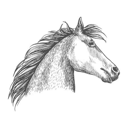 Horse portrait. Artistic vector sketch portrait. White horse profile with wavy mane