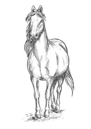 Walking white horse. Stallion standing on hoofs with mane and tail waving in wind. Vector pencil sketch portrait Illustration