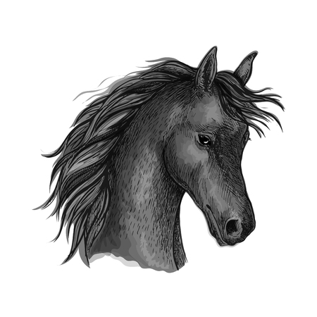 Horse portrait with wavy mane and shy look. Artistic vector sketch portrait