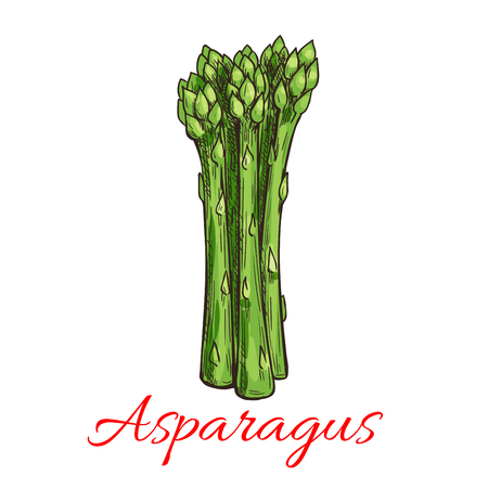 fresh vegetable: Asparagus vegetable plant icon. Bunch of asparagus stems. Fresh food product element for sticker, grocery shop, farm store element Illustration