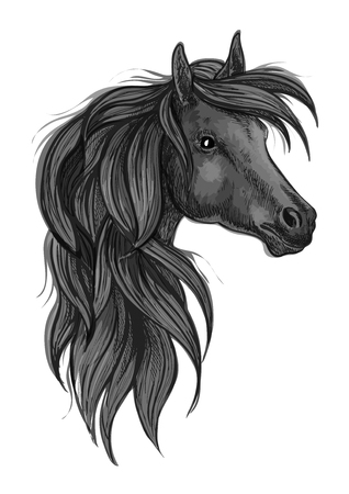 filly: Sketch of black purebred horse. Head of black arabian racehorse with long wavy mane. Horse racing symbol, equestrian sport badge or t-shirt print design