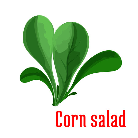 Corn salad leaf vegetable cartoon icon with dark green rosette of rounded leaves. Healthy vegetarian food, organic farming and salad recipe design