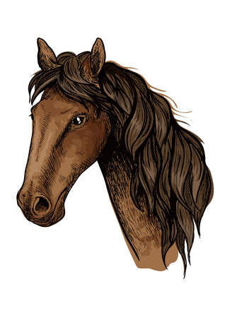 filly: Brown racehorse sketch with head of purebred mare horse of arabian breed. Horse racing, equestrian sporting competition symbol or t-shirt print design