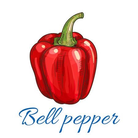 pimenton: Bosquejado vegetal pimiento rojo. pimentón dulce fresca para la agricultura ecológica, tienda de comestibles y diseño de la comida vegetariana