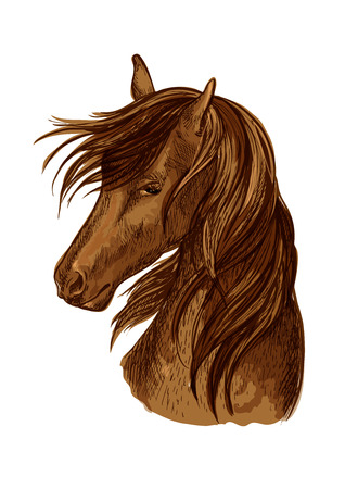 filly: Horse head sketch. Brown racehorse mare of arabian breed for horse racing badge, riding club symbol, t-shirt print design