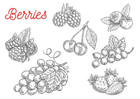 Sommer Obst und Beeren Skizze. Frische Himbeeren, Erdbeeren, Trauben, Kirschen, Brombeeren, Johannisbeeren und Heidelbeeren Früchte mit Blättern für Ernährung und Landwirtschaft Design