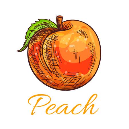 fruity: Fresh peach fruit sketch. Ripe orange peach with green leaf for juice packaging, vegetarian fruity dessert, farm market design
