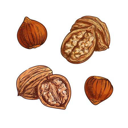 Noisettes et noix croquis. noix naturelles salubres pour symbole snack végétarien, dessert confiserie recette, la conception des aliments sains Vecteurs
