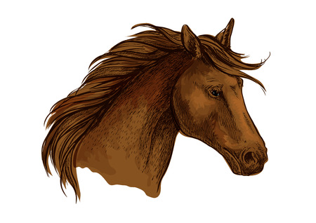 filly: Stallion horse head sketch. Brown purebred arabian racehorse. Equestrian sport badge, horse racing symbol or t-shirt print design Illustration