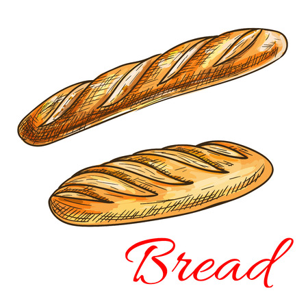 Sketch of wheat bread with fresh crispy french baguette and long loaf. Bakery shop and food packaging design