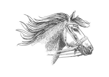 Horse head in a bridle with bit and reins sketch. Running arabian racehorse with flowing mane for horse racing symbol, equestrian sporting competition badge design