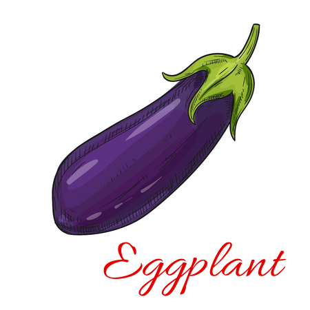 aubergine: Sketched eggplant vegetable isolated icon. Ripe purple aubergine for vegetarian and healthy food, organic farm and greengrocery market design