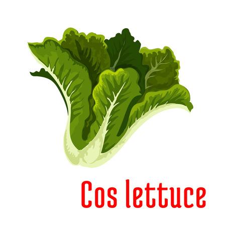 cos lechuga fresca icono con el manojo de lechuga romana con hojas verdes. La agricultura ecológica, receta de la ensalada vegetariana, diseño de envases de alimentos