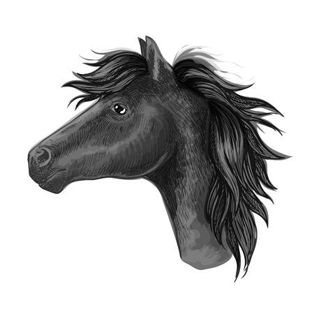 the arabian mare: Black mare horse sketch of a head of purebred riding horse of arabian breed. Horse racing symbol, riding club badge or equestrian sport mascot design
