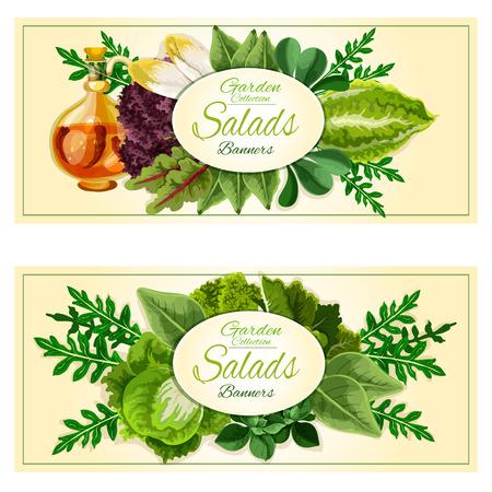 escarola: Ensalada de verduras y hortalizas conjunto de banners con hojas verdes llenas de savia de lechuga, repollo, espinacas, rúcula, berros, iceberg, escarola, acelga, col rizada con aceite de oliva infundido con chile