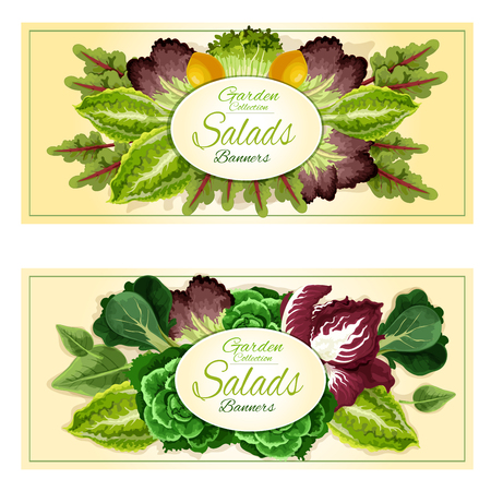 leaf lettuce: Fresh organic leaf vegetables and salad greens banners set with cabbage, lettuce, spinach, watercress, radicchio, bok choy, arugula, purple kale, iceberg lettuce and chard