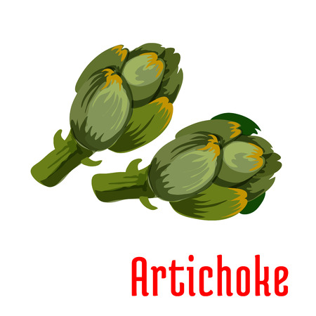 fresh vegetable: Fresh artichoke vegetable icon of healthy and tasty buds with dark green scales. Vegetarian salad, diet nutrition, agriculture harvest themes design