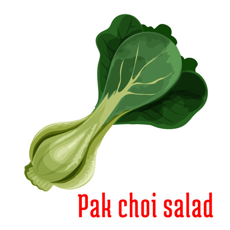 bok choy: Bok choy or chinese cabbage vegetable icon with fresh cluster of green pak choi. Oriental cuisine, healthy vegetarian salad menu design