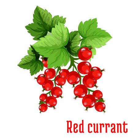 greengrocery: Red currant fruit cartoon icon of green branch with red berries and fresh leaves. Dessert and drink menu, farm market design