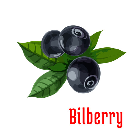 ripe: Bilberry fruit with green leaves icon with fresh forest blueberry berries. Food and fruit drinks design