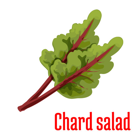 sign store: Chard salad plant icon. Isolated leafy vegetable green element. Vegetarian leaf salad product sign for sticker, grocery shop, farm store
