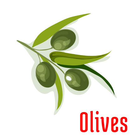 olive farm: Olive branch with olives fruits and leaves. Isolated vegetable vegetarian fresh product sign for sticker, grocery shop, farm store element