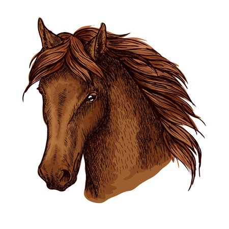 Brown horse portrait. Graceful and noble mustang with proud look and beautiful eyes Illustration