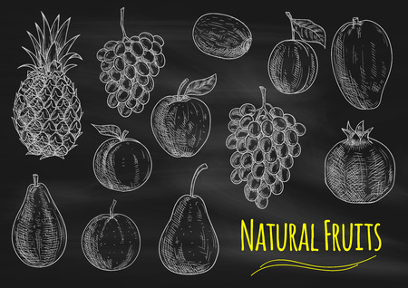 apple isolated: Fruits chalk sketch on blackboard. Isolated vector fruit of exotic and tropical pineapple, grape, avocado, orange, apple, peach, pear, kiwi, apricot mango pomegranate Illustration