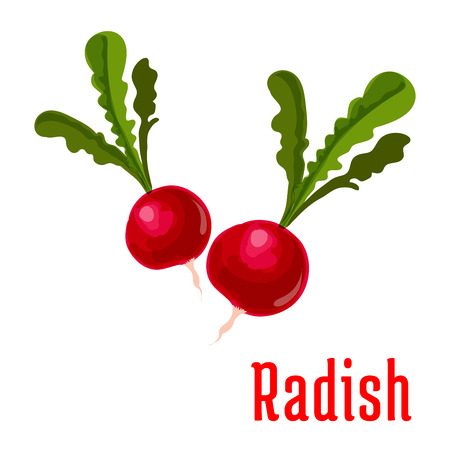 garden plant: Radish vegetable plant icon. Bunch of garden radishes with leaves. Fresh food product element for sticker, grocery shop, farm store element Illustration