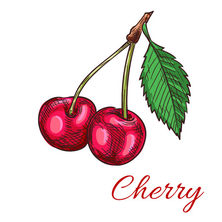fruit stem: Cherry berries. Isolated bunch of cherries on stem with leaves. Fruit and berry product emblem for juice or jam label, packaging sticker, grocery shop tag, farm store