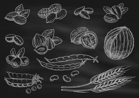 walnut: Nuts, grain, berries chalk sketch on blackboard. Isolated vector icons of coconut, almond, pistachio, sunflower seeds, peanut, hazelnut, walnut, coffee beans, wheat ears coffee beans pea pod berries Illustration