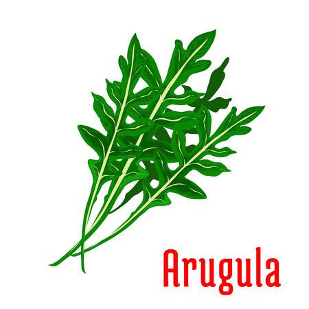fresh vegetable: Arugula vegetable icon. Isolated leafy arugula bunch. Vegetarian fresh food salad ingredient emblem for sticker, grocery shop, farm store element