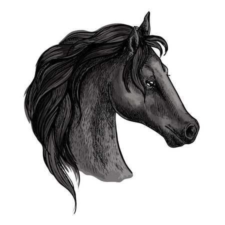 Horse portrait. Black horse profile with wavy mane and proud noble look. Artistic vector sketch