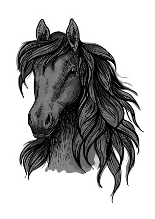 looking down: Black horse portrait. Stallion proudly looking down with long strands of wavy mane. Artistic vector sketch portrait