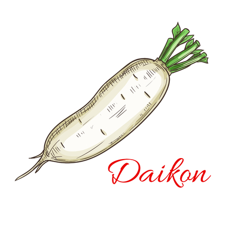 fresh vegetable: Daikon vegetable icon. Isolated daikon radish root. Vegetarian fresh food product sign for sticker, grocery shop, farm store element