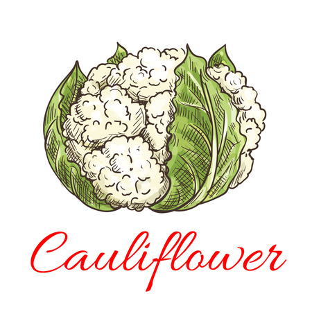 isolated ingredient: Cauliflower vegetable icon. Isolated leafy cauliflower. Vegetarian fresh food ingredient emblem for sticker, grocery shop, farm store element Illustration