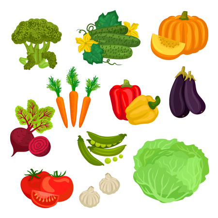 food market: Farm vegetables isolated flat icons. Vegetarian farm vegetable products. Broccoli, cucumber, pumpkin, carrot, beet, pepper, eggplant, green pea, tomato, garlic, cabbage graphic elements for grocery store food market product shop