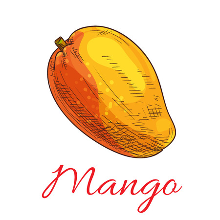 tropical drink: Mango fruit vector color sketch icon. Isolated whole exotic tropical mango product emblem for juice or jam label, drink sticker, farm store design element